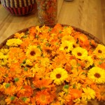 Calendula preparations and more….