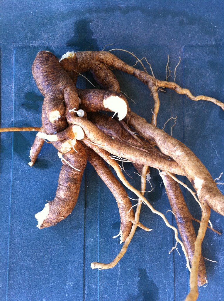Roots ready for medicine making