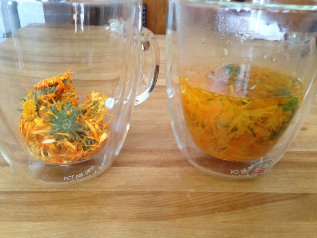 Comparison of dried Calendula flowers and re-hydrated flowers in water.