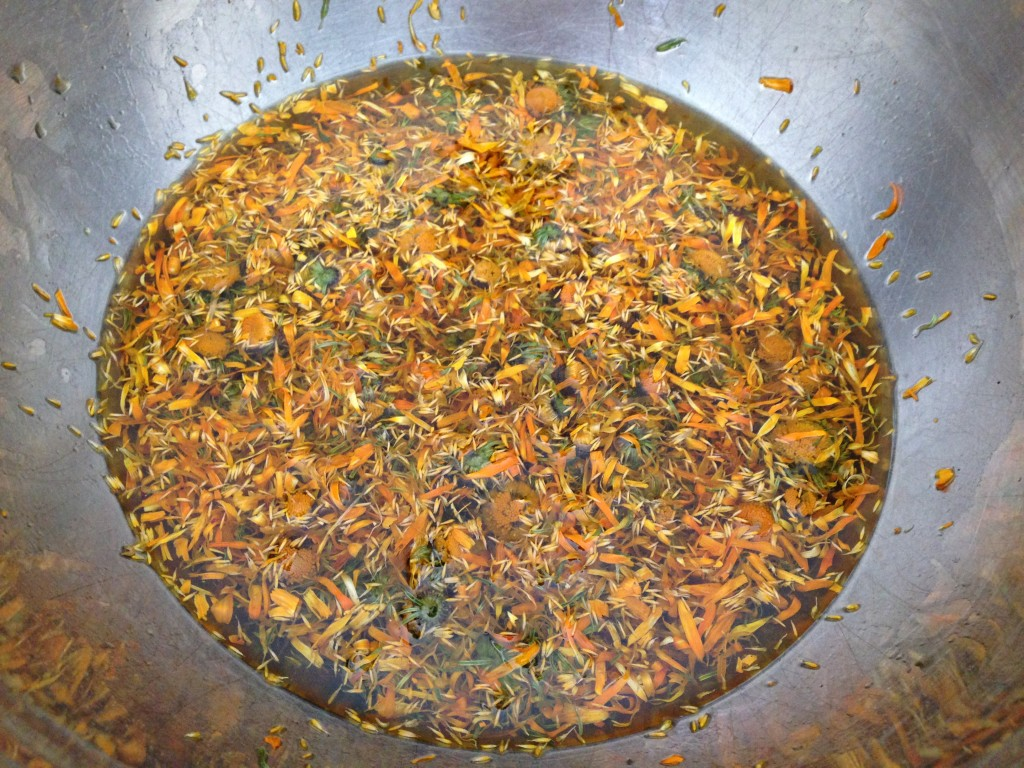 Infusing dried Calendula flowers in oil.